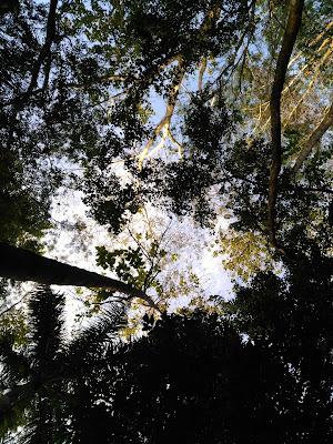 Hutan Kota Malabar (1)