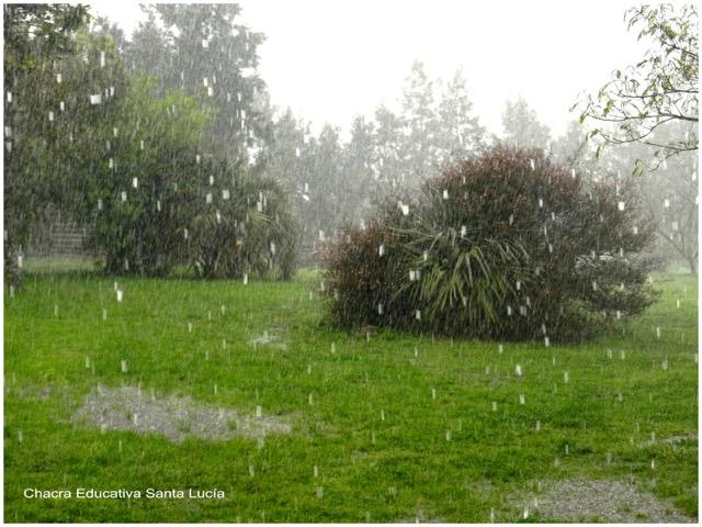 Lluvia fuerte cayendo sobre la vegetación - Chacra Educativa Santa Lucía