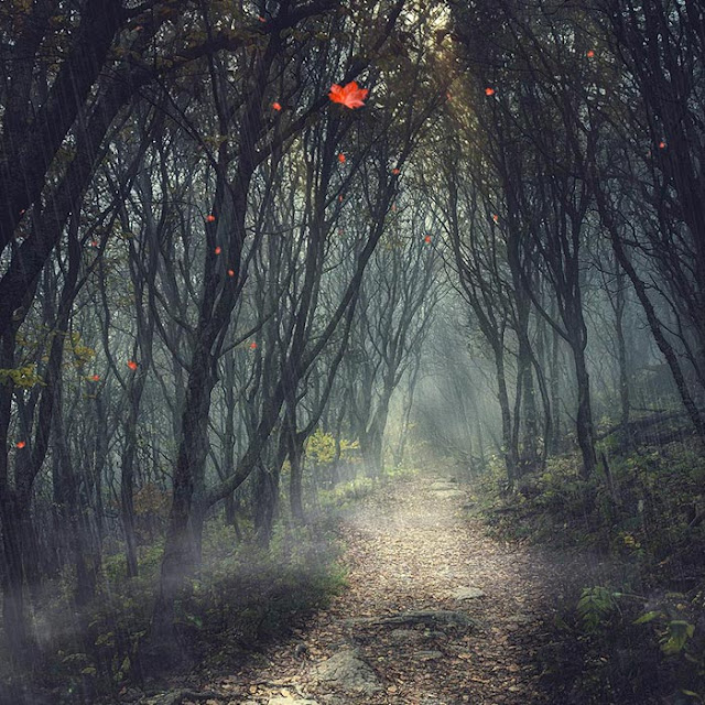 Scary Forest Wallpaper Engine