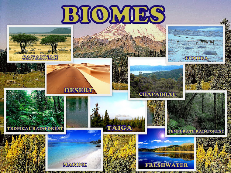 maccused all about freshwater biome