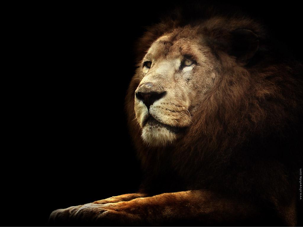 unusual wallpaper black lion
