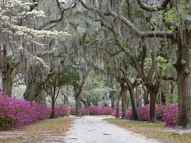 سافانا ,ولاية جورجيا Savannah,ga Usa