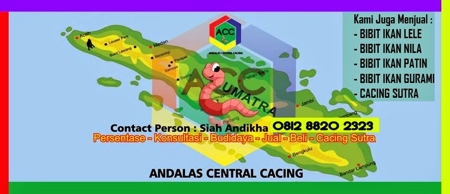 Cacing Sutra 2014