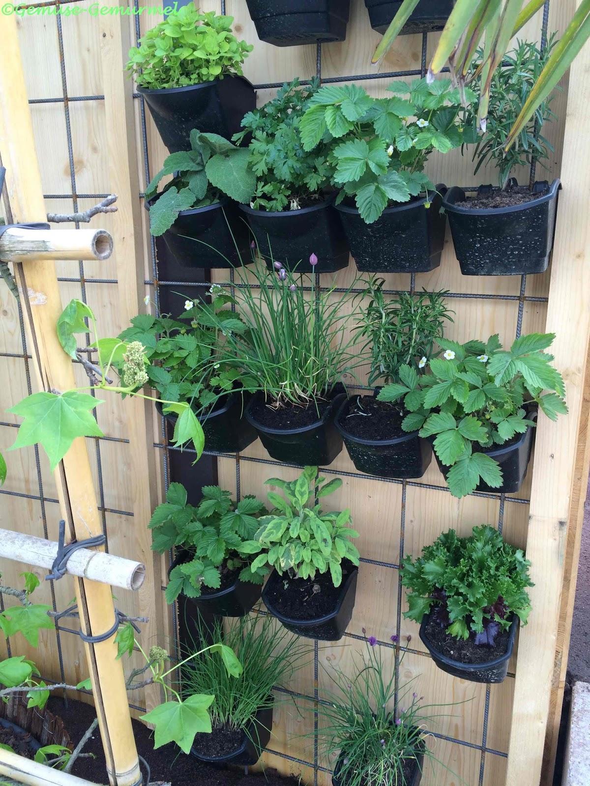 Gemüse-Gemurmel: Pfingstferien mit Bildung