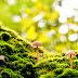 Hãy sống như một cây cỏ dại càng bị giẫm đạp càng phải vươn lên