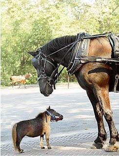 Pony y percheron