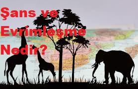 Şans ve Evrimleşme Nedir?