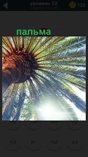 пальма вид снизу на верх на 22 уровне в игре 470 слов
