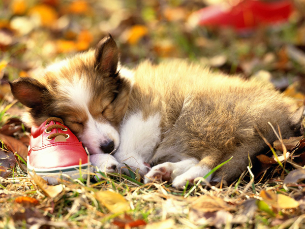 Gallery Dog Wallpaper I Love Pets Cute And Docile