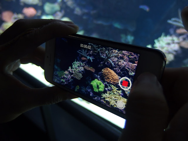 SEA Aquarium Singapore iPhone