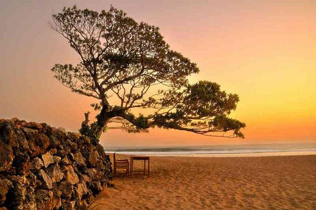 Pantai Pok Tunggal Satu Satunya Pantai Berpohon Duras Di Jogja Look Jogja