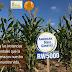 Posterga SCJN decisión sobre siembra de soya transgénica de Monsanto