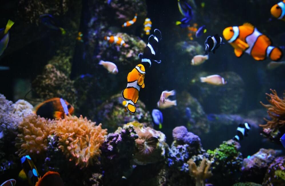 Vinpearlland Times City chứa nhiều loại sinh vật biển đa dạng