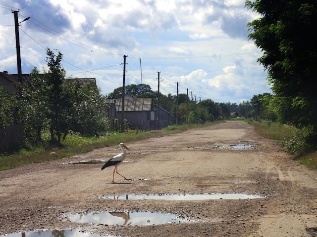 Bocian na drodze, gdzieś w ukraińskiej części Bukowiny