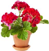 Rahsia Bunga Atau Tanaman Halaman Rumah Hidup Subur