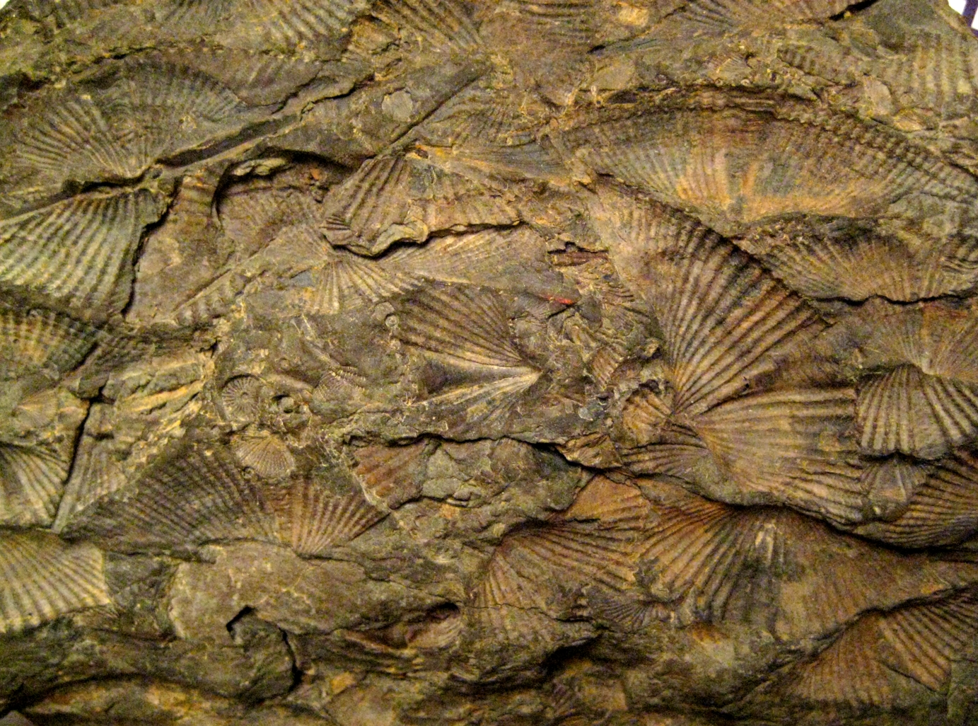 Fossils And Other Living Things November