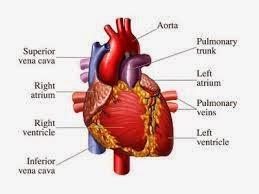Obat Jantung Bocor untuk Anak