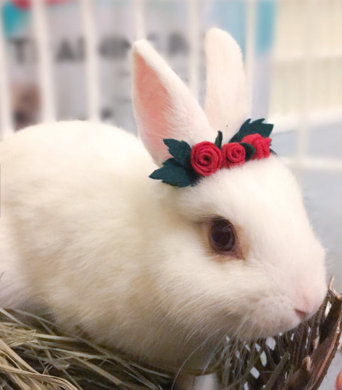 Christmas for Rabbits