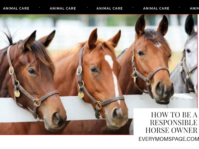 How to Be a Responsible Horse Owner