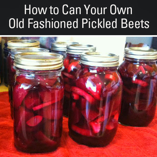 How to Make and Can Old Fashioned Pickled Beets!