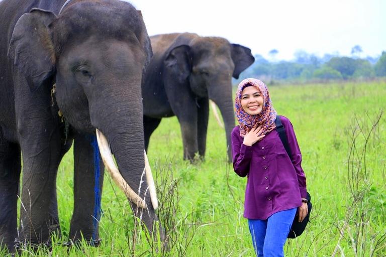 Gajah Taman Nasional Way kambas
