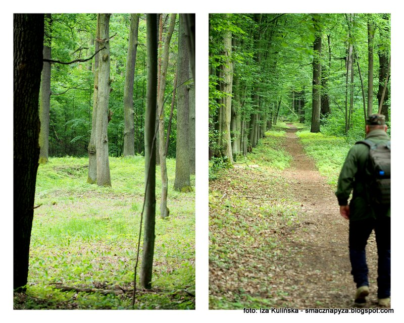 rezerwat przyrody, las sobieskiego, marysin wawerski, wedrowanie, spacer, sciezka edukacyjna, puszcza mazowiecka