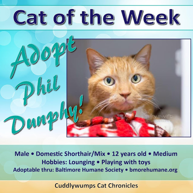 #catoftheweek #adoptablecat