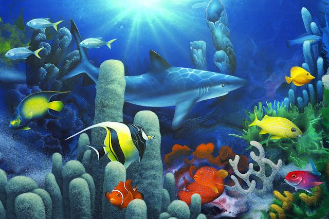 Akvaario tapetti kalat koralli veden alla lapset Lapset hai