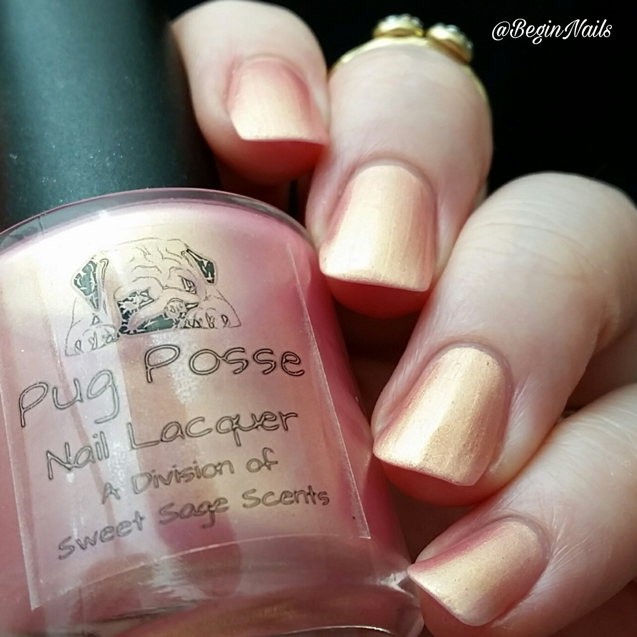 Let\'s Begin Nails: Pug Posse Nail Lacquer - Pug Love Collection ...
