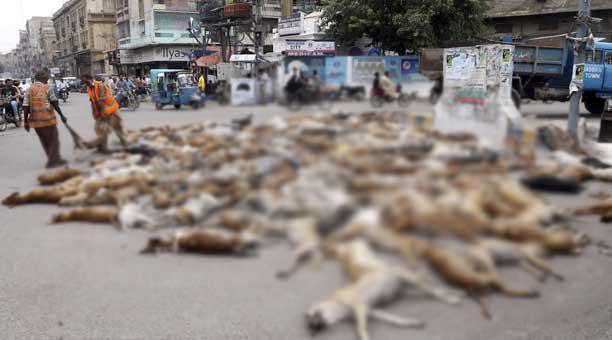 Brutal matanza de más de 700 perros callejeros en las calles de Pakistán