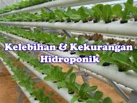 Kelebihan dan Kekurangan menanam dengan hidroponik