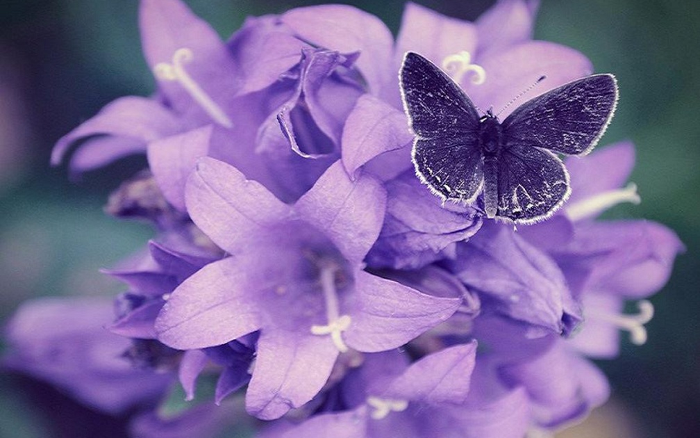 Flowers Pictures   Flowers Wallpapers  Purple Violet Flowers Purple Violet Flowers