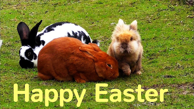 happy easter images wallpapers greetings pictures cards