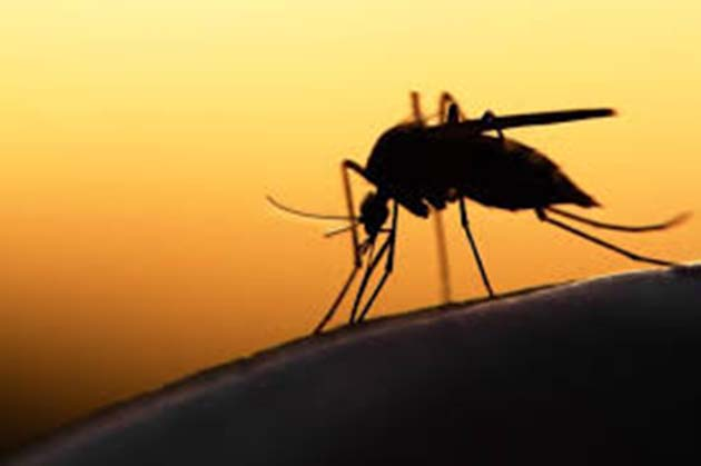 Zika, mejor ong para donar, fundacion noble, noticias ong,