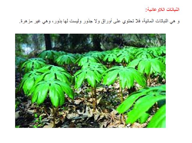 أنواع النباتات، نباتات مغروسة ، نباتات تلقائية، النباتات البذرية أو الوعائية و النباتات اللاوعائية