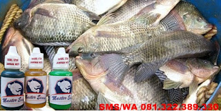 Essen Oplosan Paling Mantap Untuk Ikan Nila