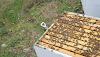 Όχι άλλος χώρος στα μελίσσια: Τώρα περιμένουμε τα μέλια, μια συμβουλή παλιού μελισσοκόμου...