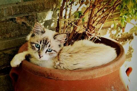 Jenis Kucing Ras Paling Lucu beserta Harga Terbaru