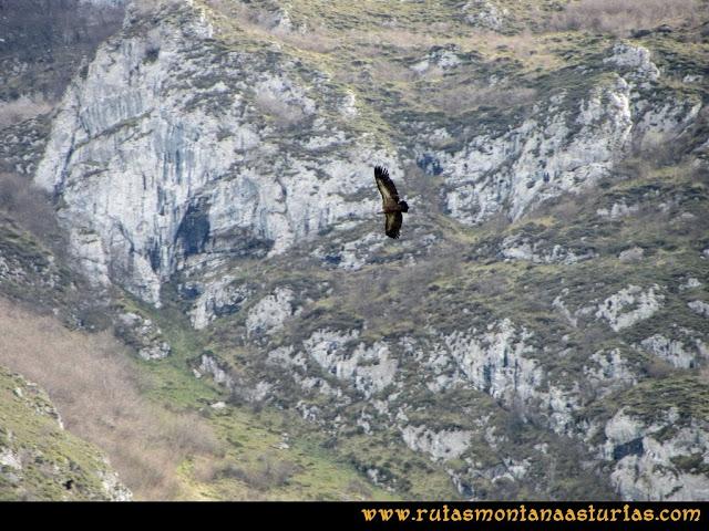 Ruta al Pico Gorrión: Buitre sobre la Sierra del Gorrión