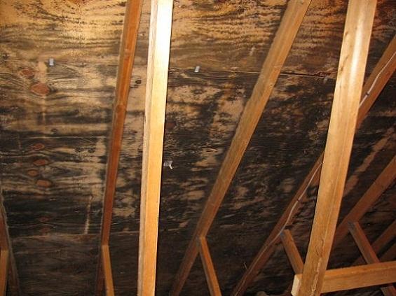 Odgrzybianie drewna - usuwanie grzyba i pleśni z drewna