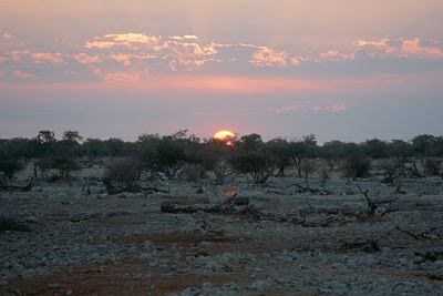 Namibia, Etosha National Park, sundowner, safari