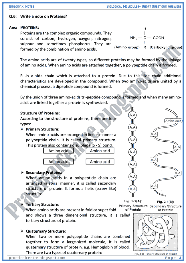 Biological Molecules - Short Questions Answers - Biology XI