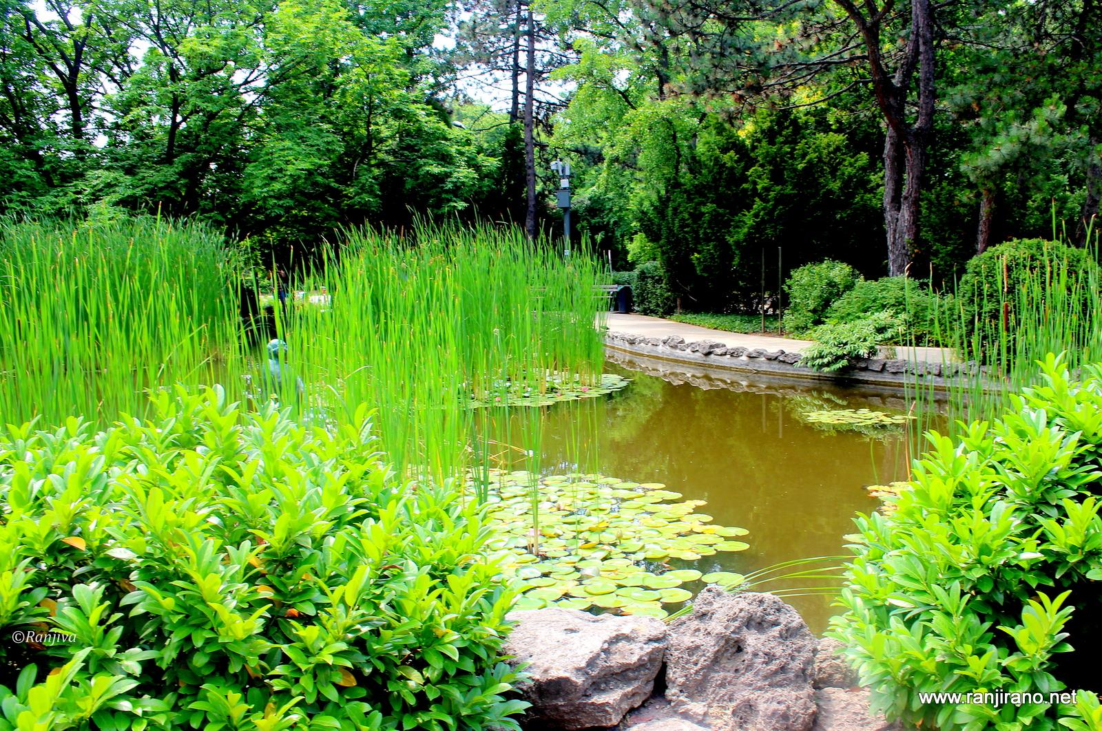 Un ravissant jardin japonais sur l 39 le marguerite for Jardin japonais yvelines