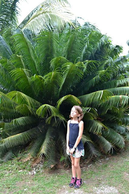 Guyane, Jardin botanique, Macouria, orchidée