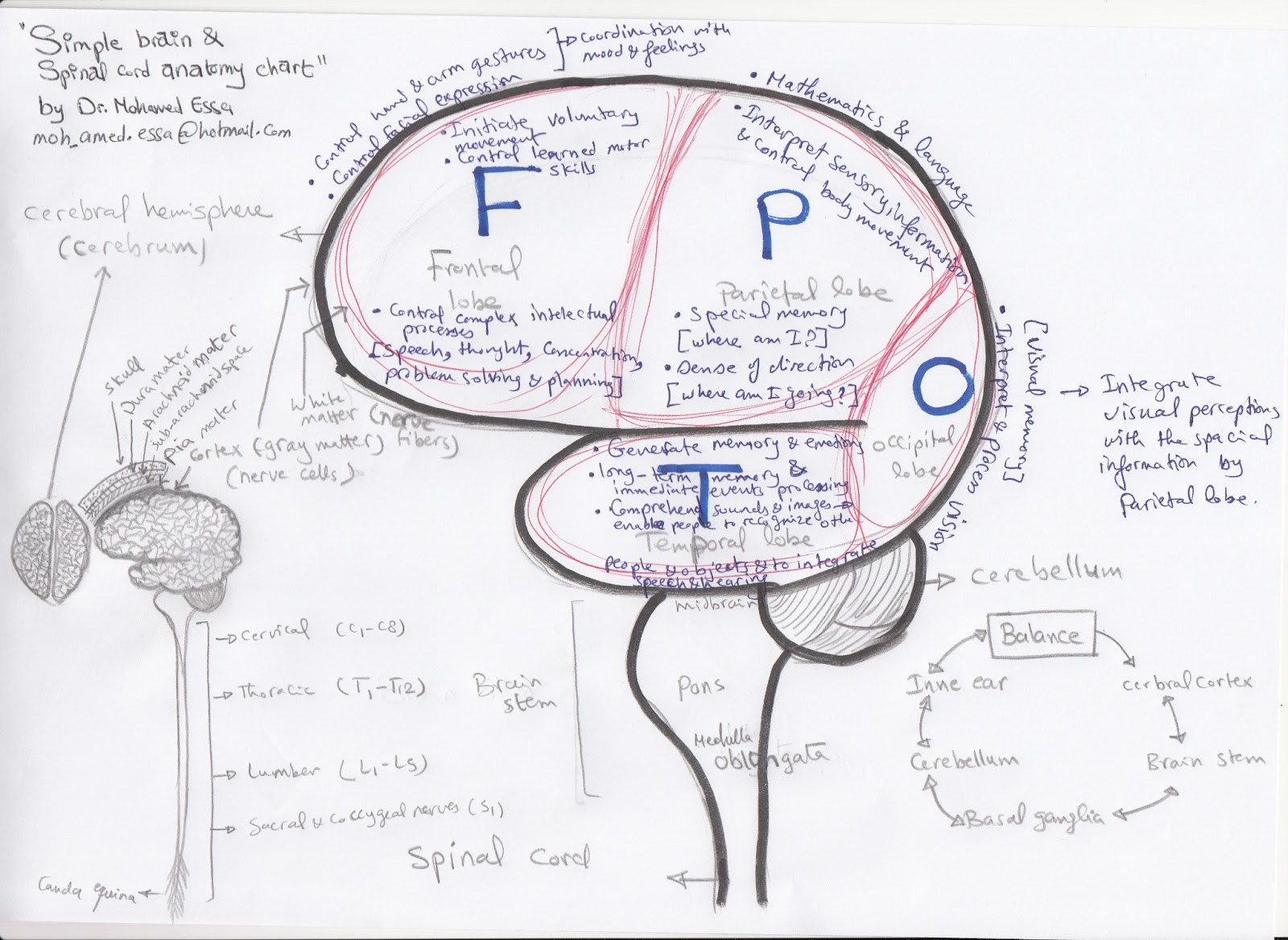 brain and spinal cord diagram square d air compressor pressure switch wiring sciencenectar february 2013