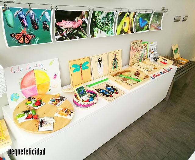 Pequefelicidad nuestro proyecto insectos 20 actividades for A que zona escolar pertenece mi escuela