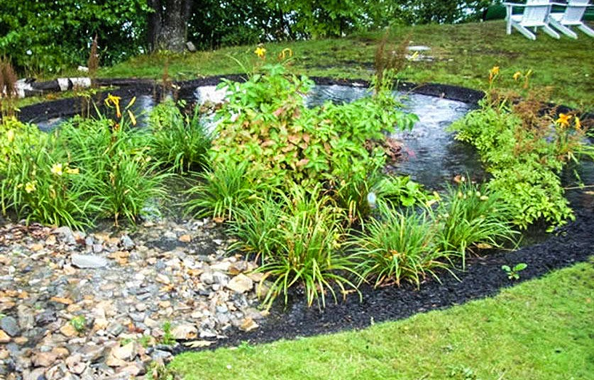 Gardening Information Basics Of A Rain Garden