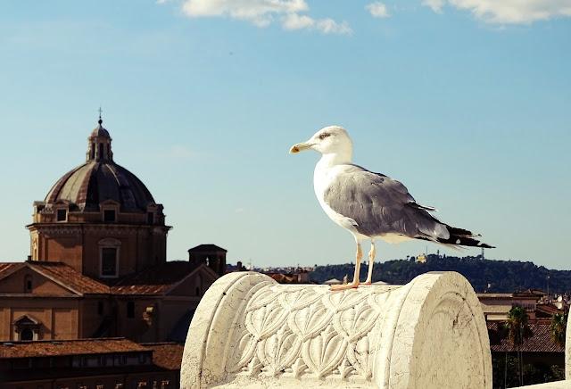 Zwiedzanie Rzymu - co warto zobaczyć