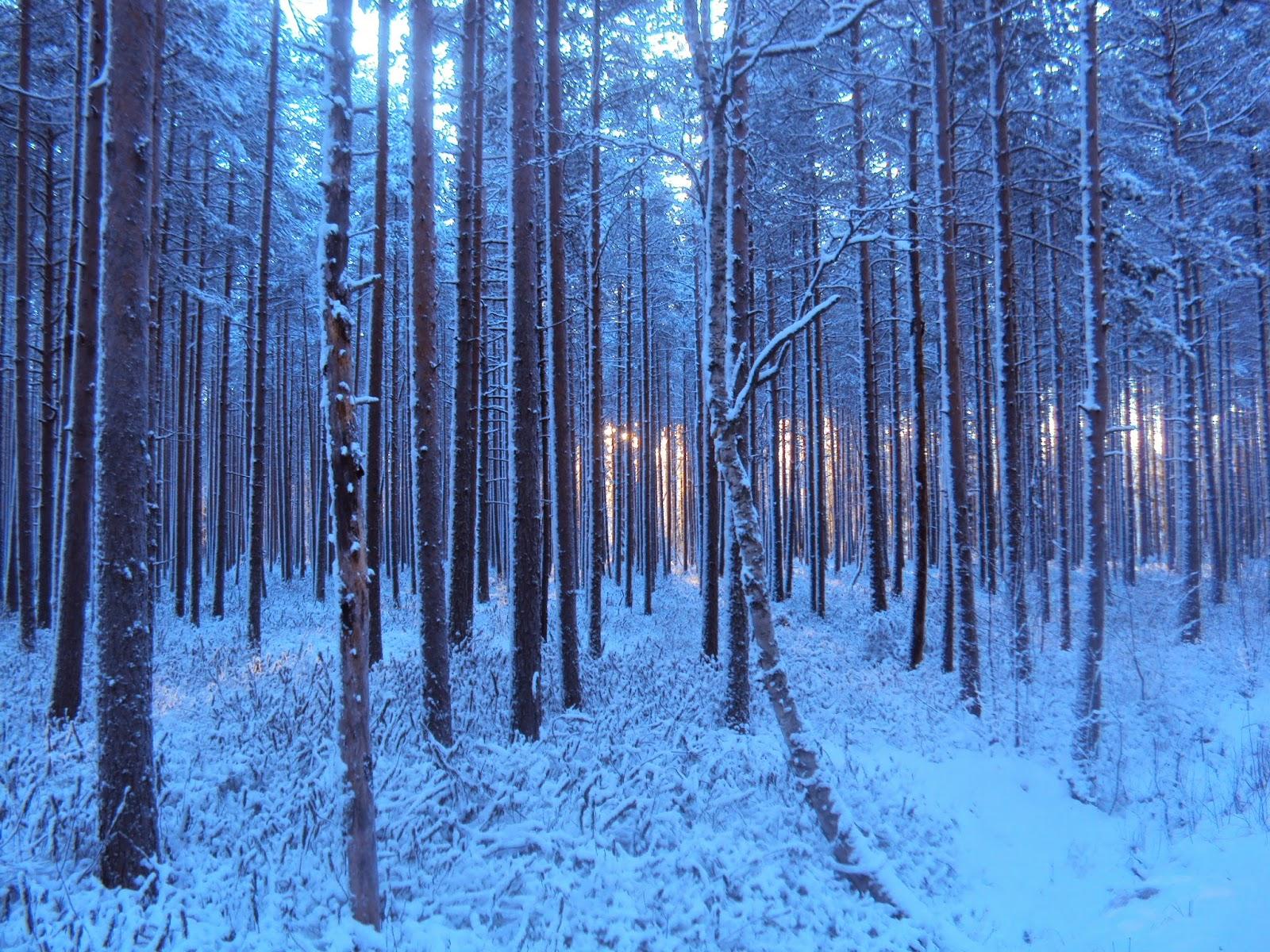 new arrival d8aaa 68d1b Juoksen jouluaattoaamuna poluilla pakkasessa hiljaa. Häikäisevä valo on  kaikkialla. Metsä on hiljainen ja kuten niin monesti aikaisemminkin  vastauksia ...