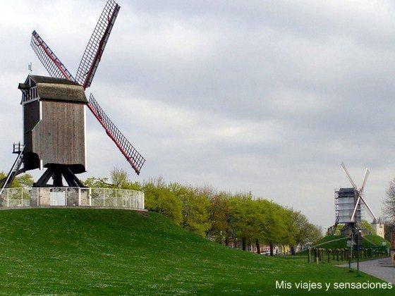 Molinos de Brujas, Bélgica